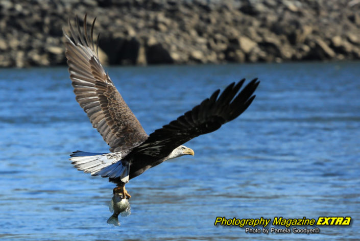 GOOD conowingo dam maryland eagles photography, where to do photography, hot spots, locations