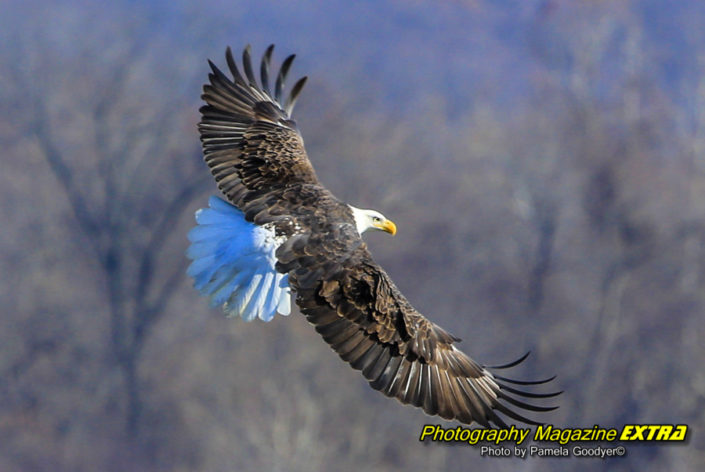 conowingo dam maryland eagles photography, where to do photography, hot spots, locations